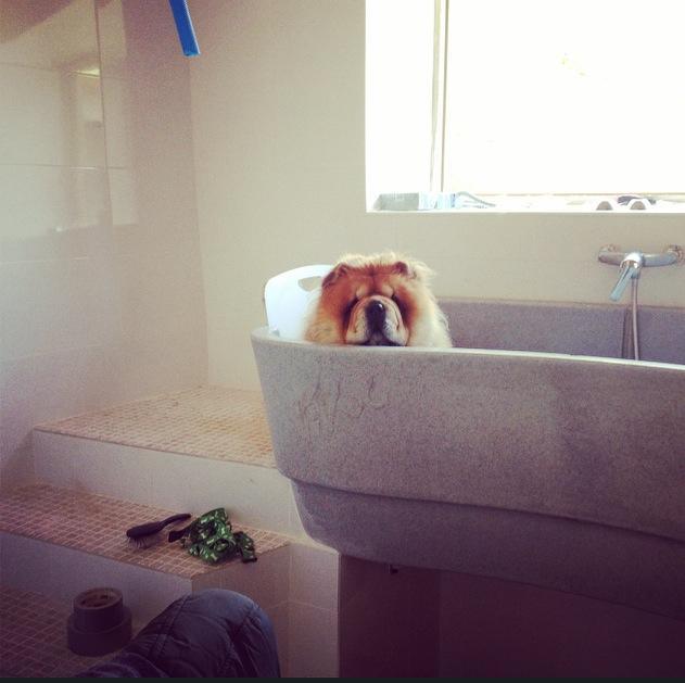 como bañar perro